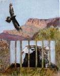 Wedgetail - Flinders Ranges 2014